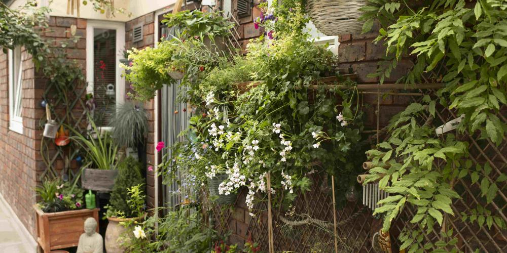 A garden in a block of flats made up of plant pots and climbing plants on the front door balcony.